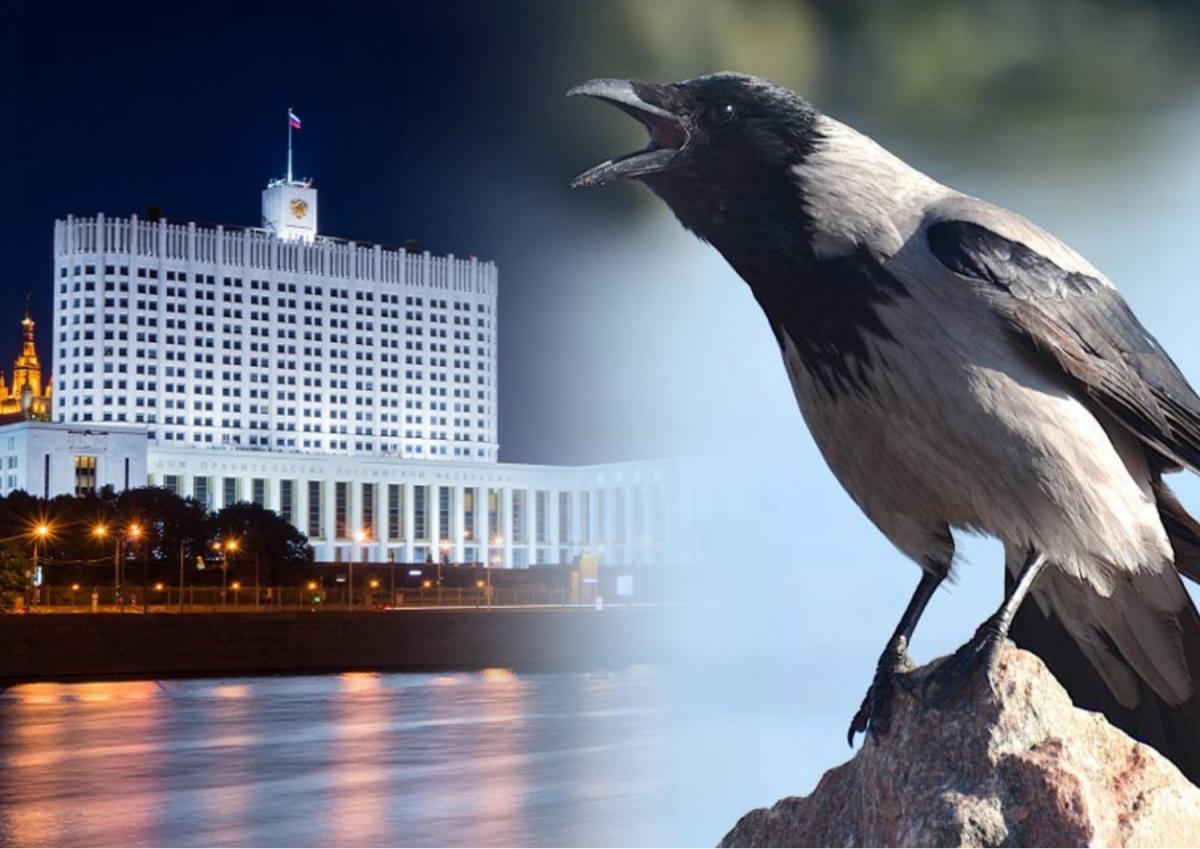 дом правительства и ворона