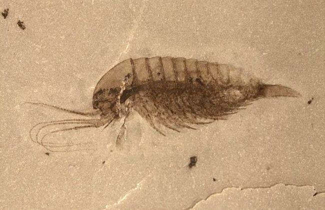 Уникальные окаменелости неизвестные науке обнаружили археологи в Китае