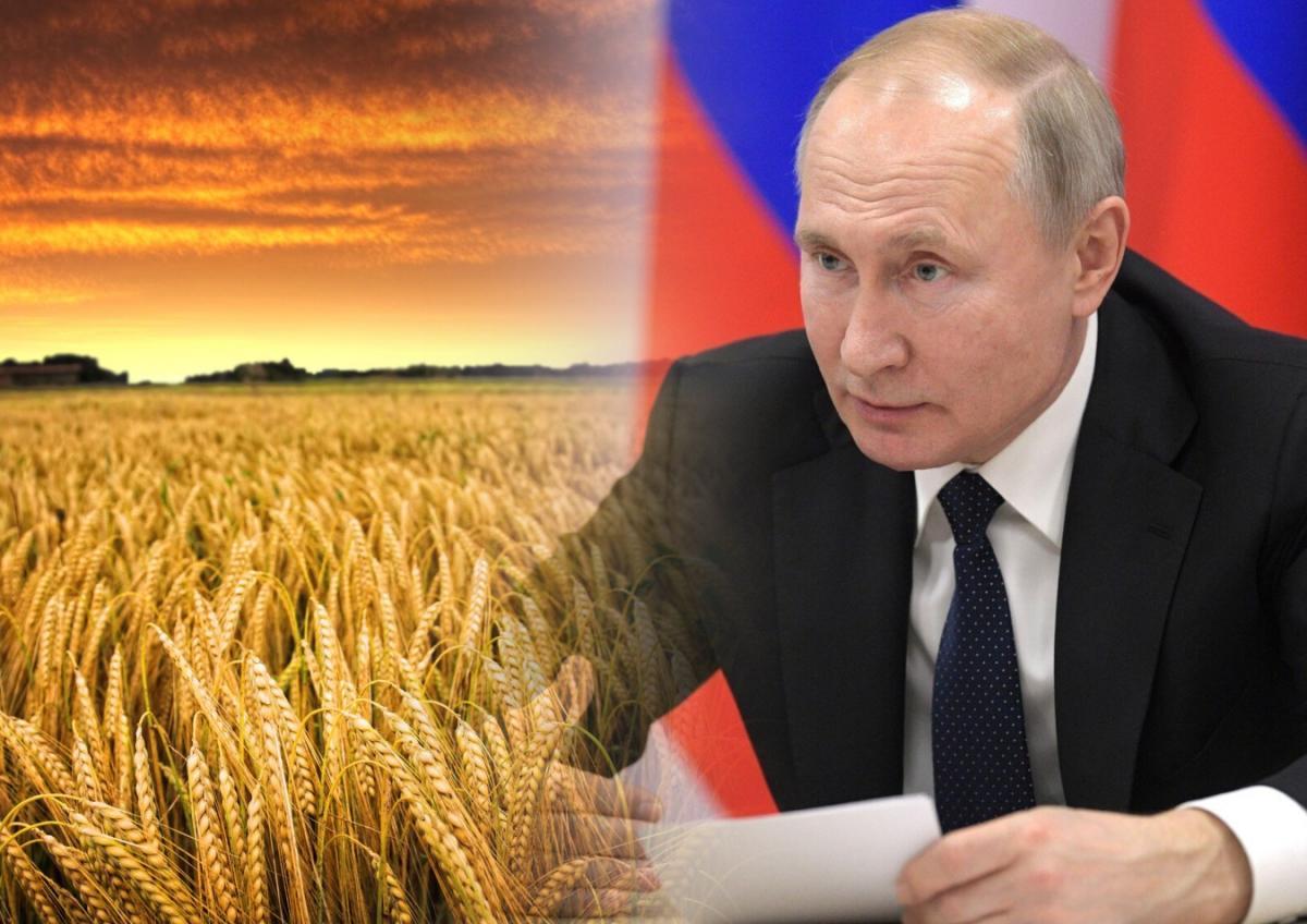 Решение Москвы в «идеальный зерновой шторм» восхитило немцев