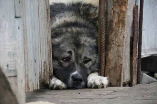В Новосибирске за смерть годовалого ребенка от укусов собаки ответит мать