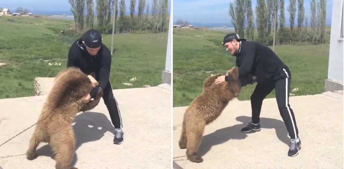 Зоозащитники PEPA осудили Хабиба Нурмагомедова за три боя с медведями