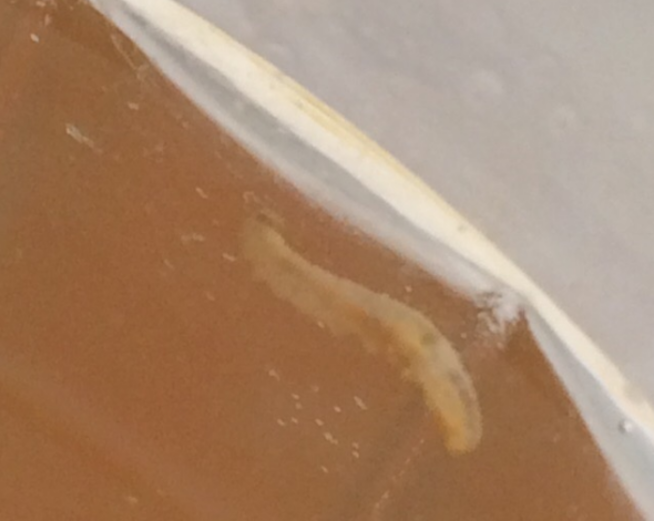 В Уральской школьной столовой в компоте обнаружены черви