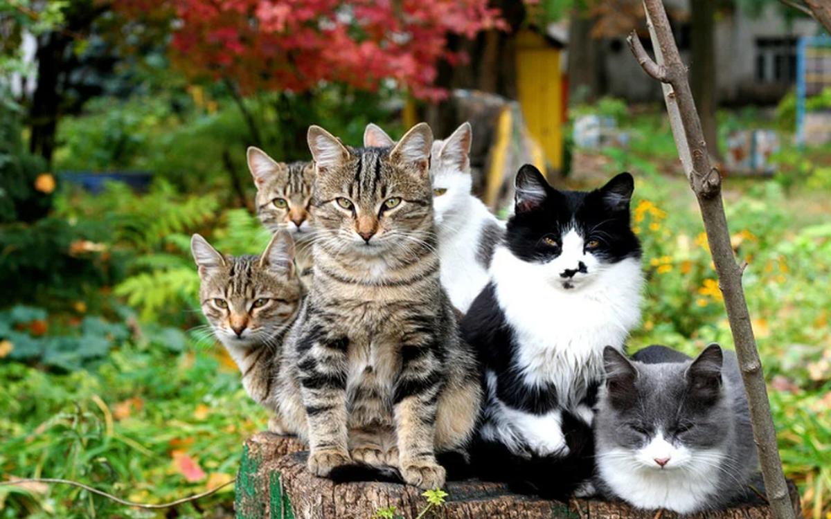 Какую кошку надо завести, чтобы привлечь в дом деньги счастье и удачу