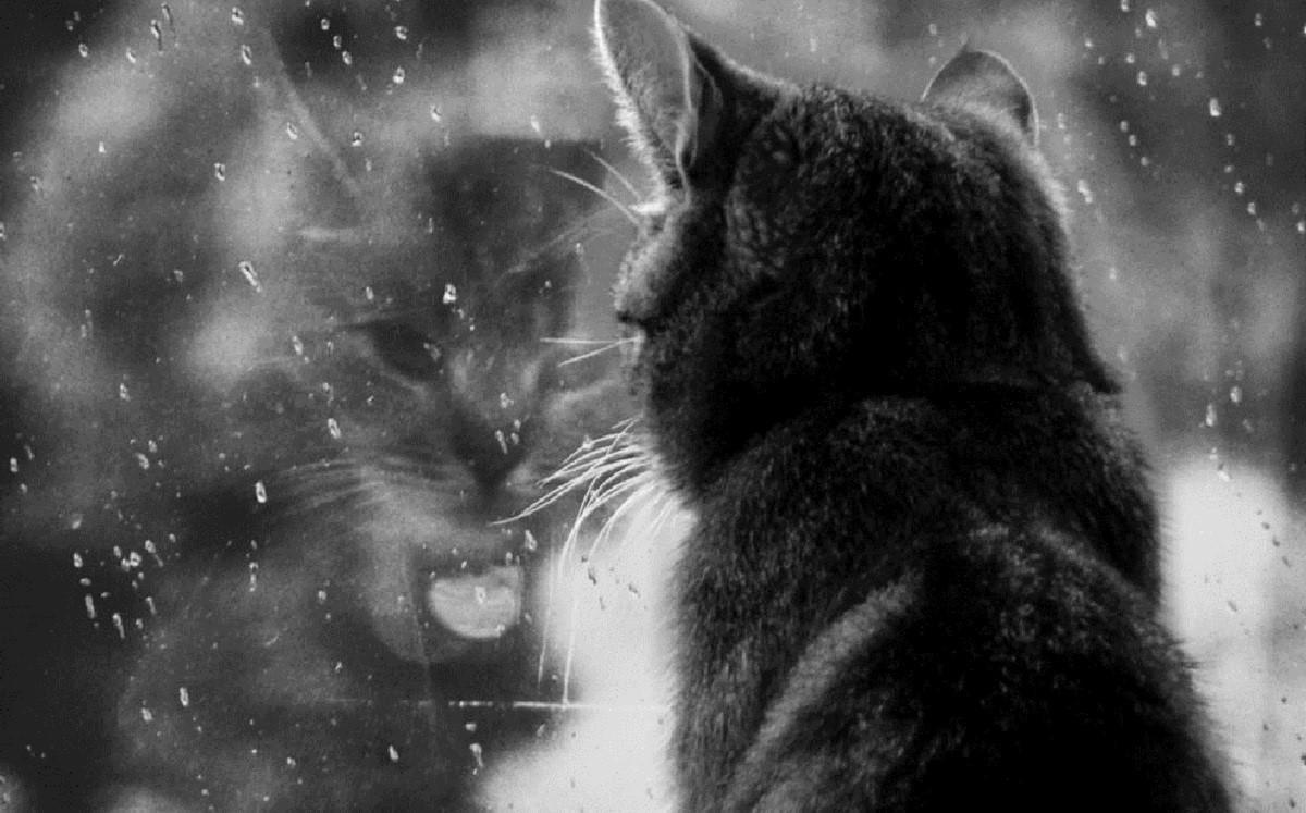 кот смотрит на дождь