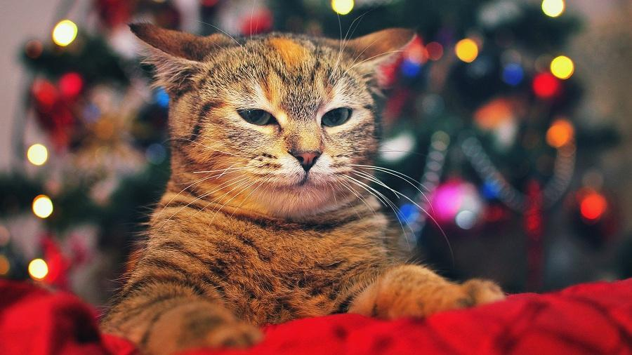 Елка, кот и Новый год: как уберечь новогоднюю елку от ...
