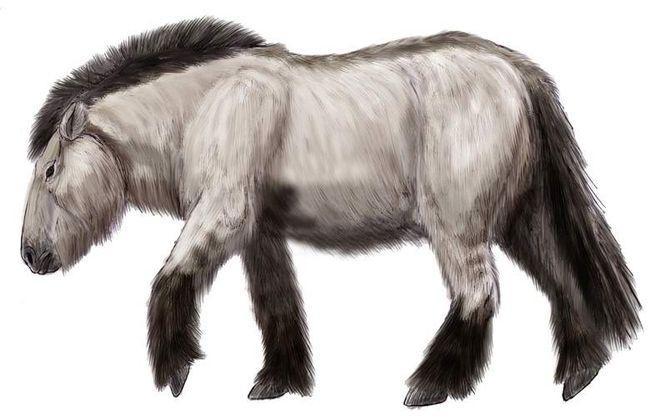 Учёные планируют клонировать лошадь ледникового периода, найденную в Якутии