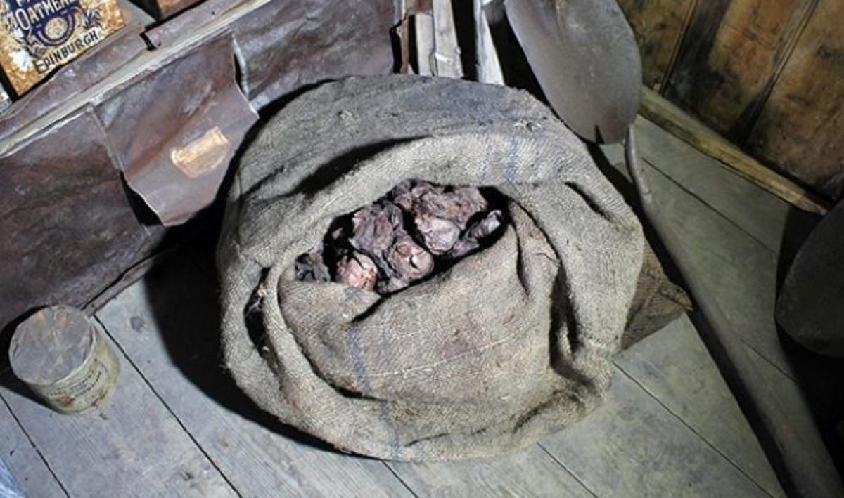 В Антарктиде обнаружен мешок лука столетней давности