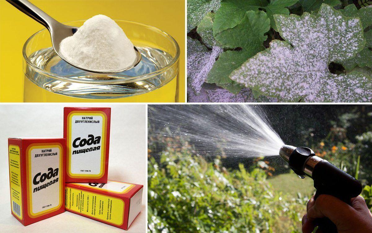 Пищевая сода улучшит урожай при посадке лука