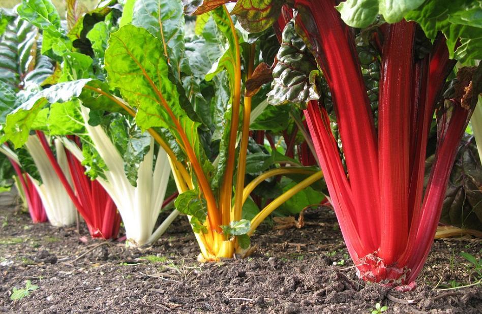 Этот овощ ускорит похудение и улучшит диету