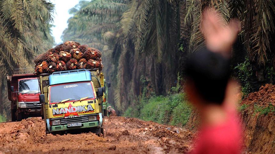 Пальмовое масло бьет рекорды импорта в России: хорошо это или плохо - рассказали специалисты