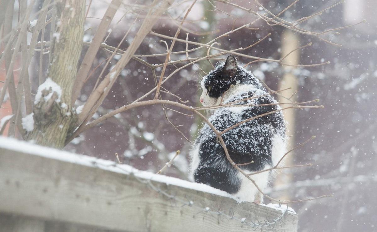 Ростовская область морозы температурные качели