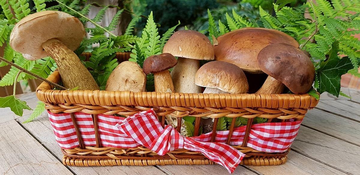 Ученые заявили, что грибы могут снизить риск развития рака предстательной железы