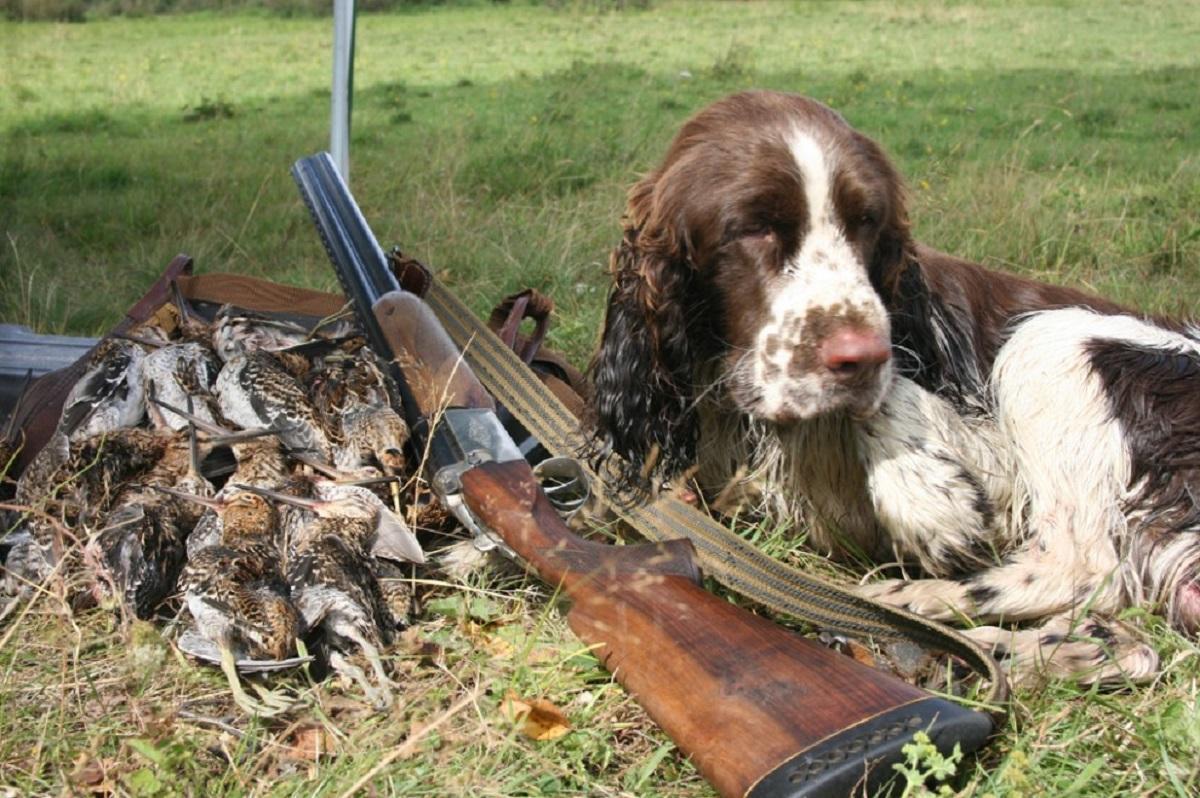 В России могут изменить закон об охотничьих хозяйствах