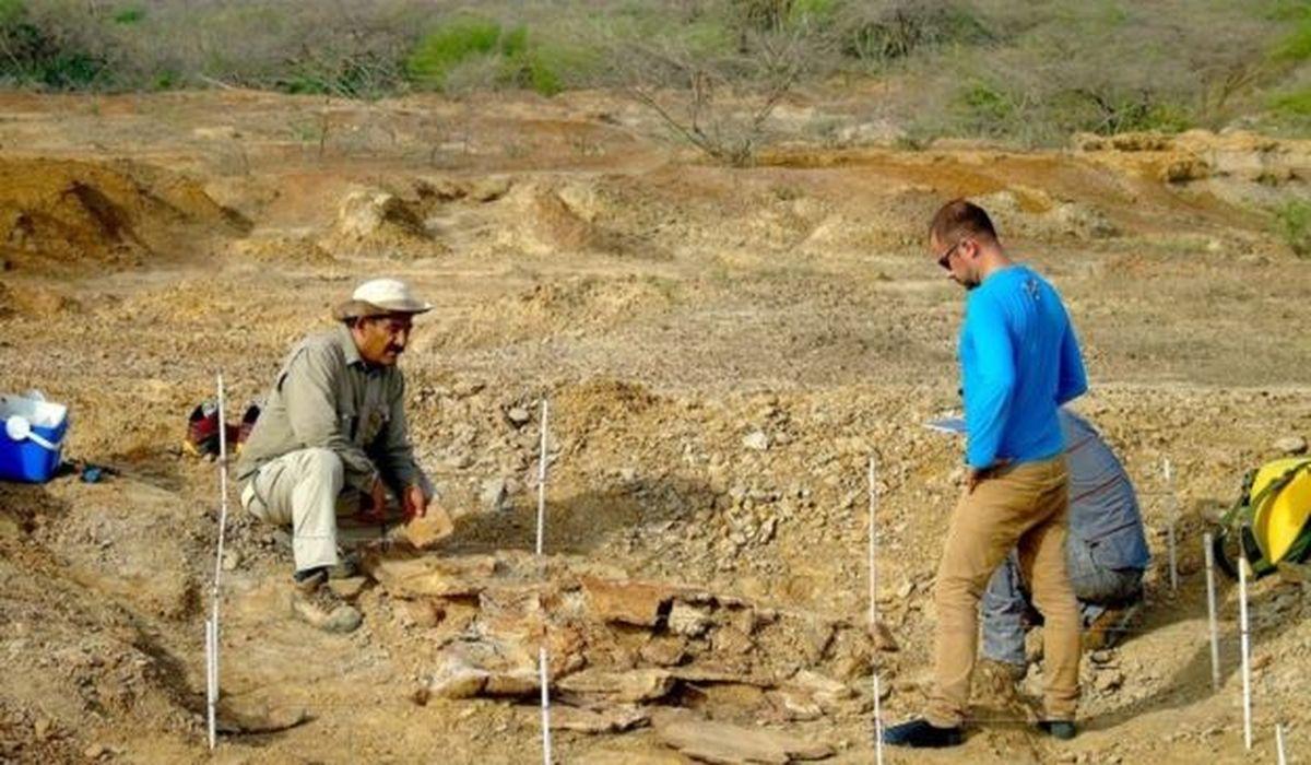 палеонтологи нашли окаменелости древних черепах