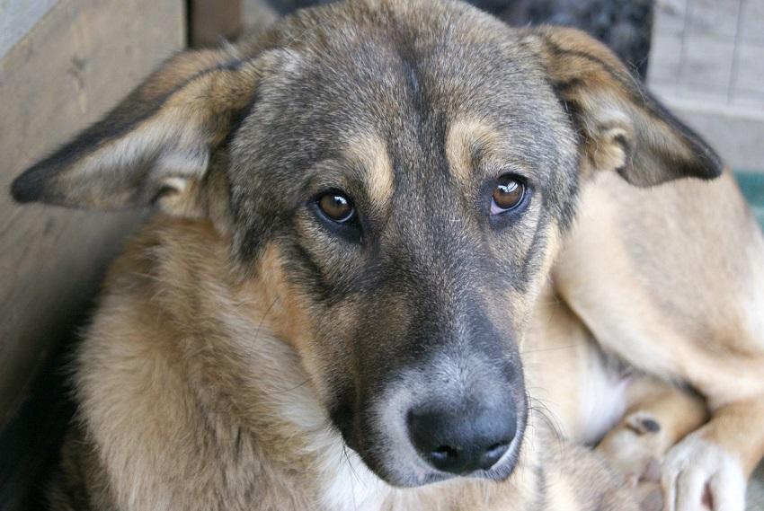 Госдума законодательно защитит животных