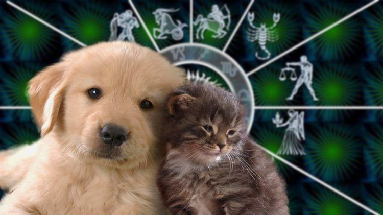 Какой питомец идеально подойдёт каждому знаку Зодиака, рассказали астрологи