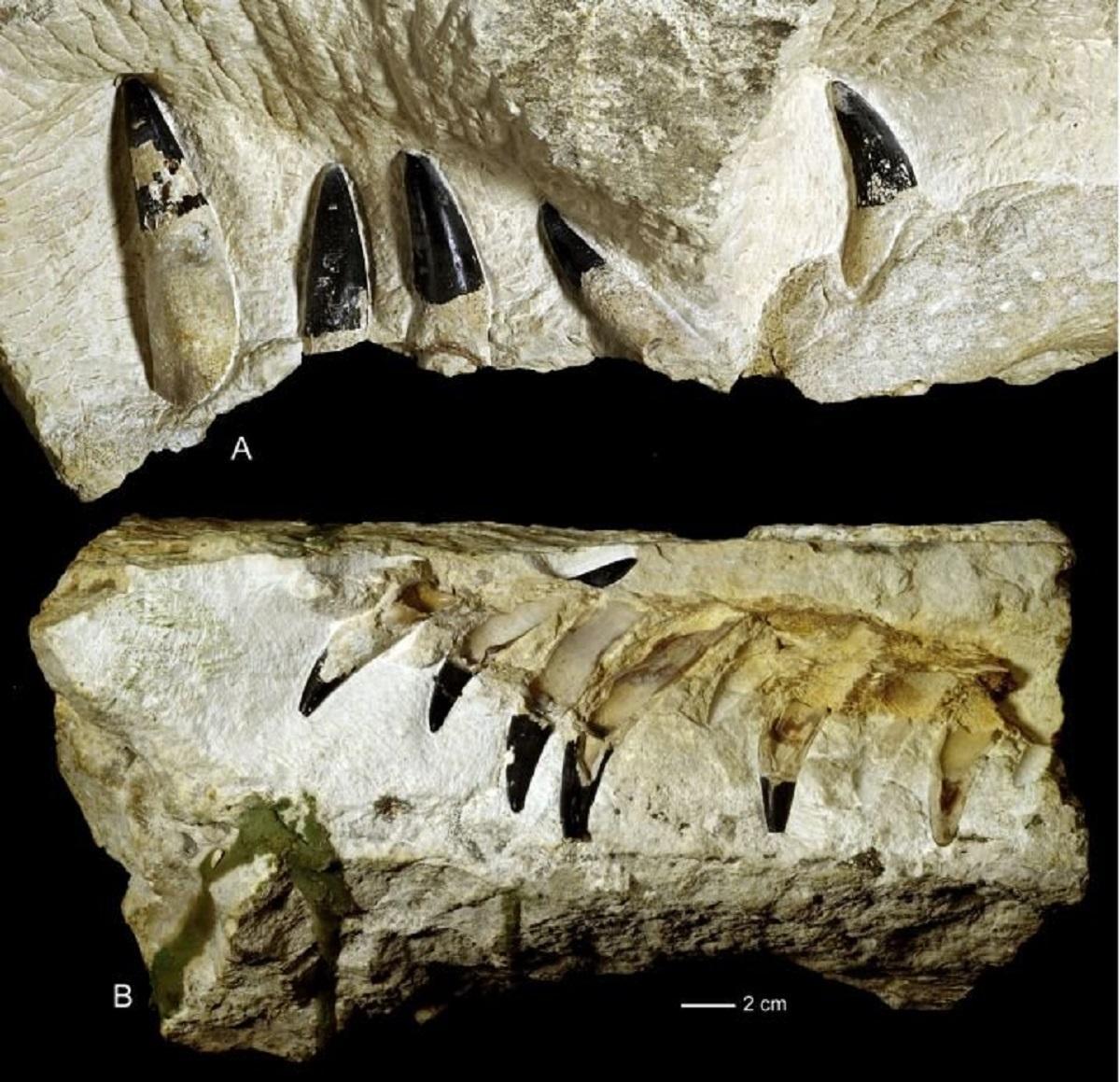 В Польше обнаружено 10-метровое морское чудовище