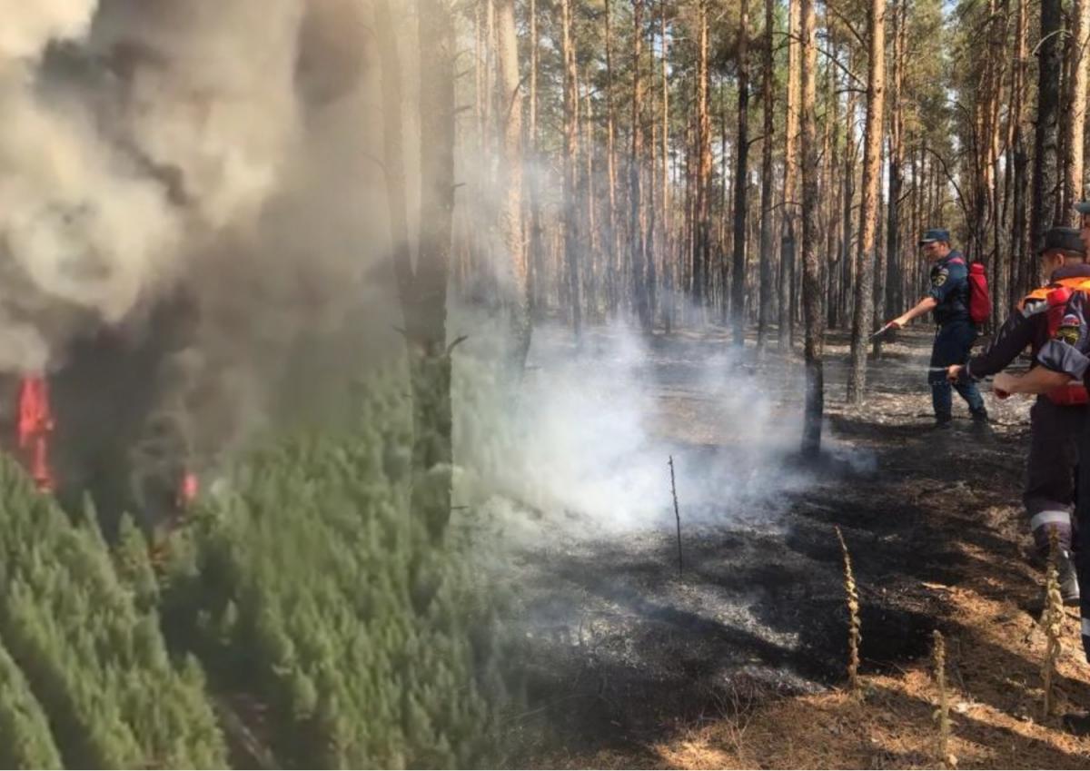 Пожары в Ростовской области