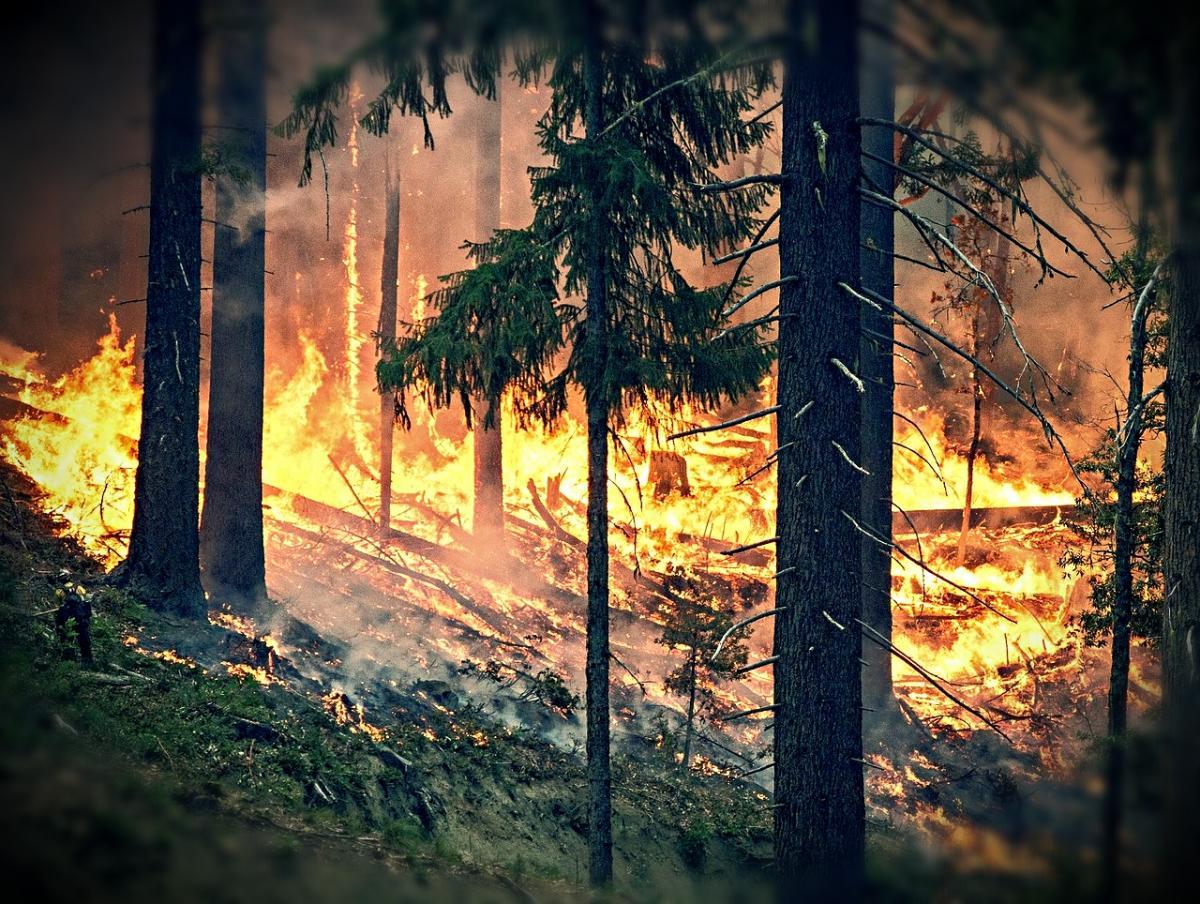 пожар, лес, пламя
