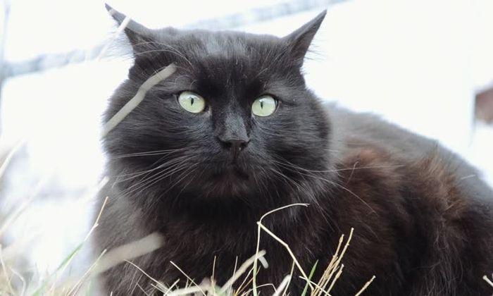 Рейтинг пяти очень редких пород кошек-иностранок