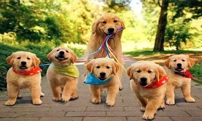 Рейтинг пяти самых модных и популярных пород собак в мире
