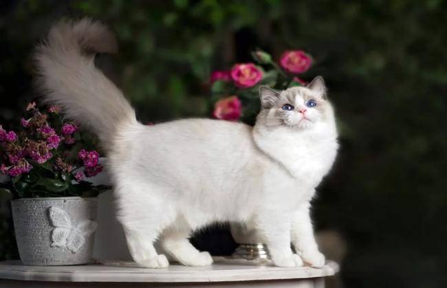 Рейтинг 10 самых лучших пород кошек для квартиры, фото