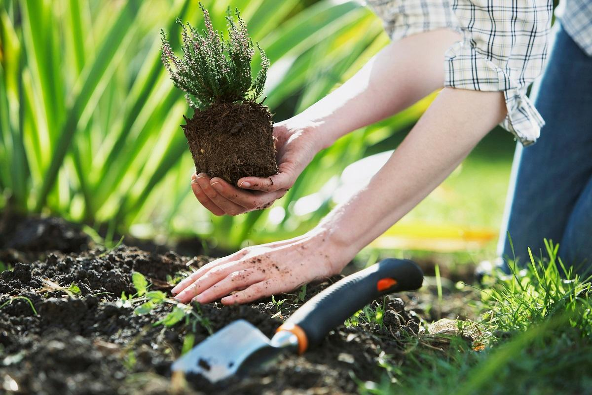 посадка огородных растений