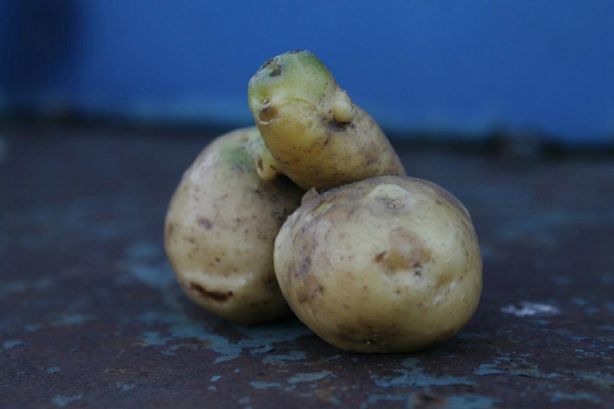 Картофель, который жалко жарить: 8 смешных картошек, которые вызывают улыбку