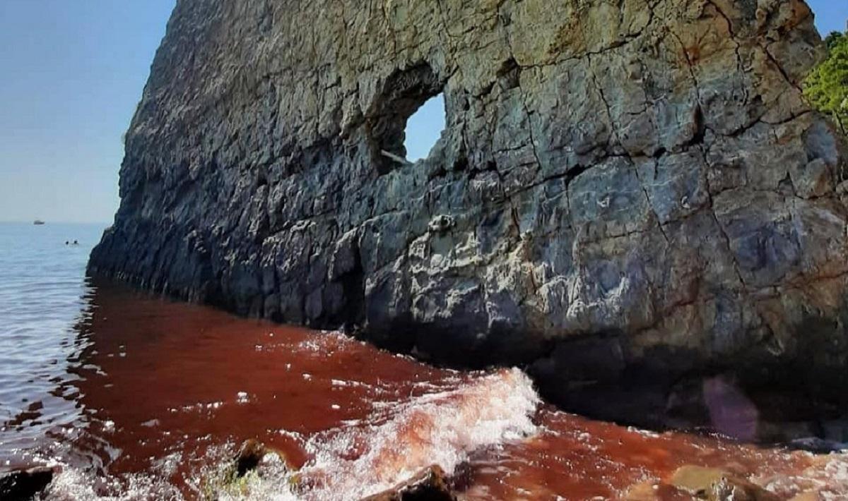 Под Геленджиком Черное море окрасилось в красный цвет