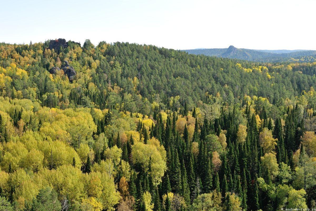 леса России фото