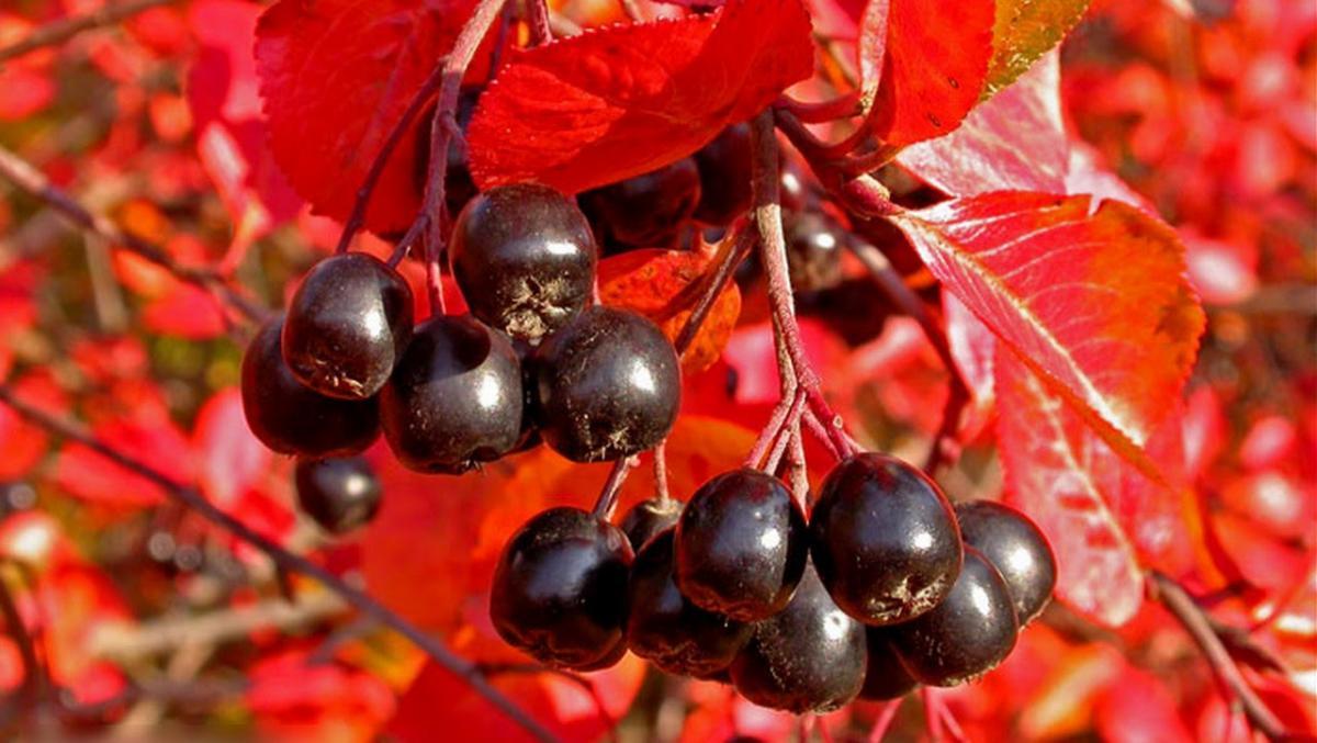 Деревья, которые стоит посадить у дома или в саду – красиво и практично