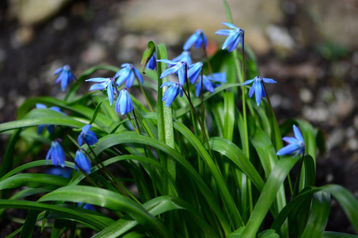 В Сочи напомнили о штрафах за сорванные лесные цветы