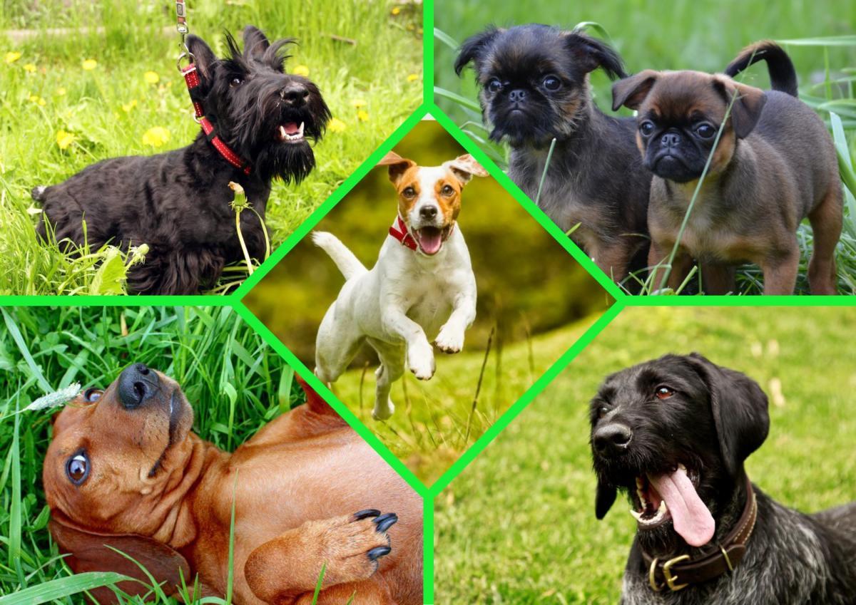 Кинологи назвали породы собак, которые подойдут для аллергиков