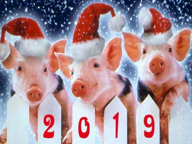 Год какого животного 2019 по восточному календарю