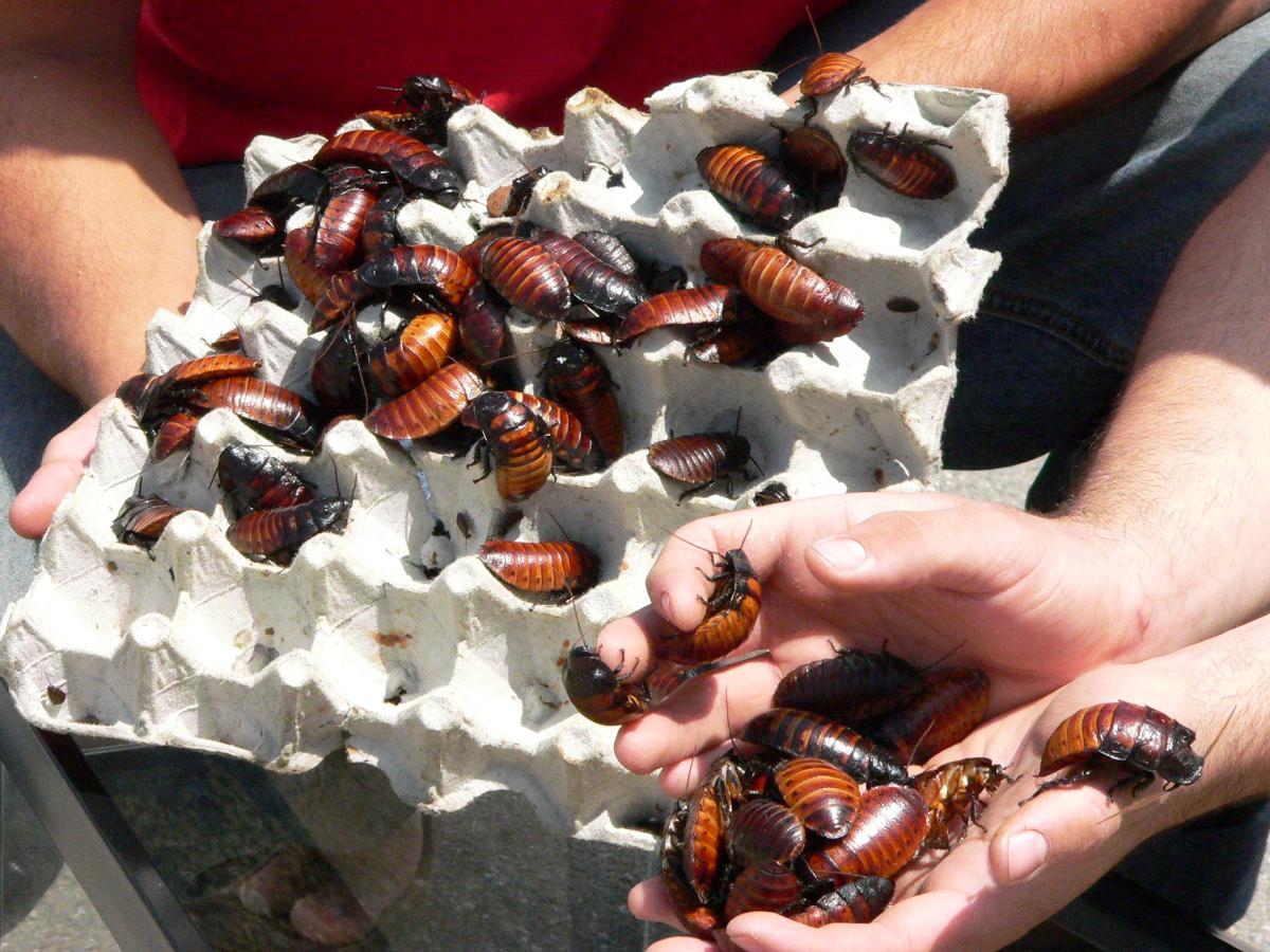Ученые раскрыли тайну живучести тараканов и почему их «ничего не берет»