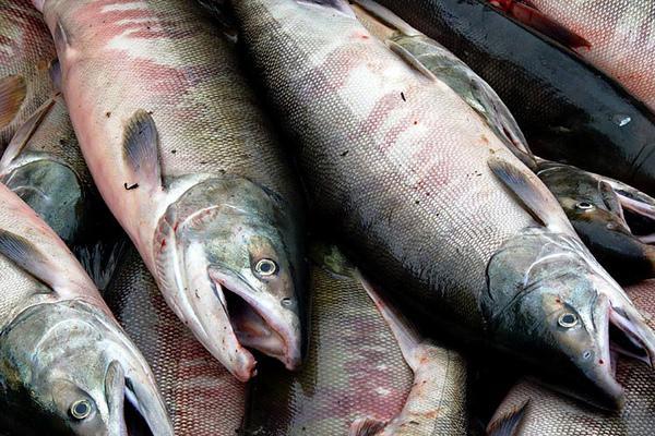 Названа самая полезная для здоровья рыба Ефременко