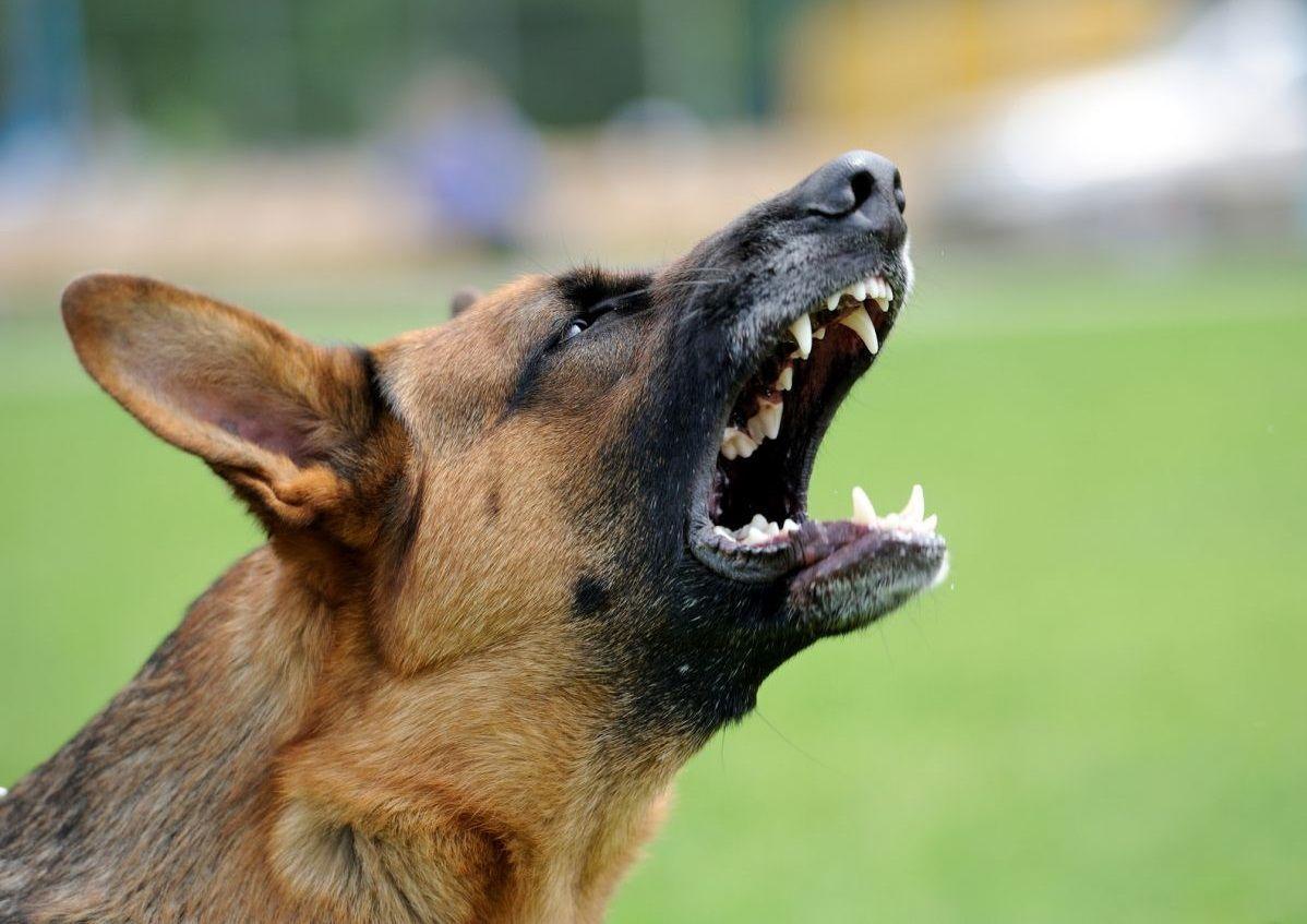 Когда нападает собака