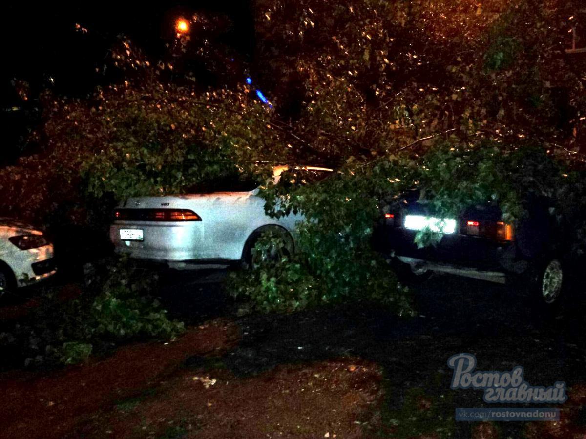 Дерево придавило машины в Ростове