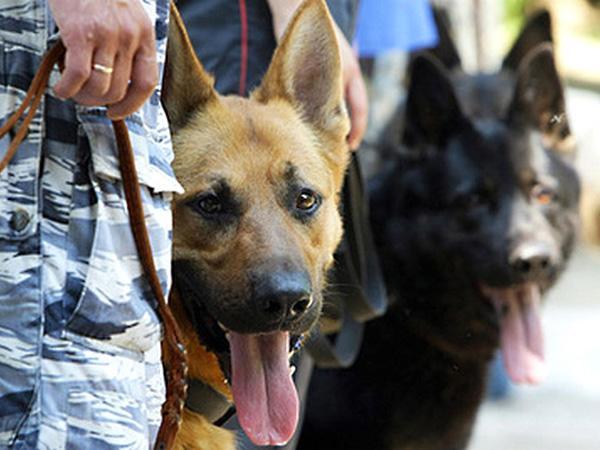 Полицейские эвакуировали служащих иклиентов Сбербанка