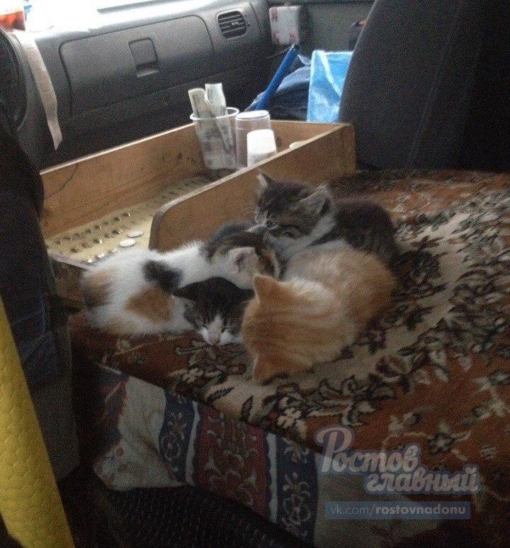 Котята в маршрутке