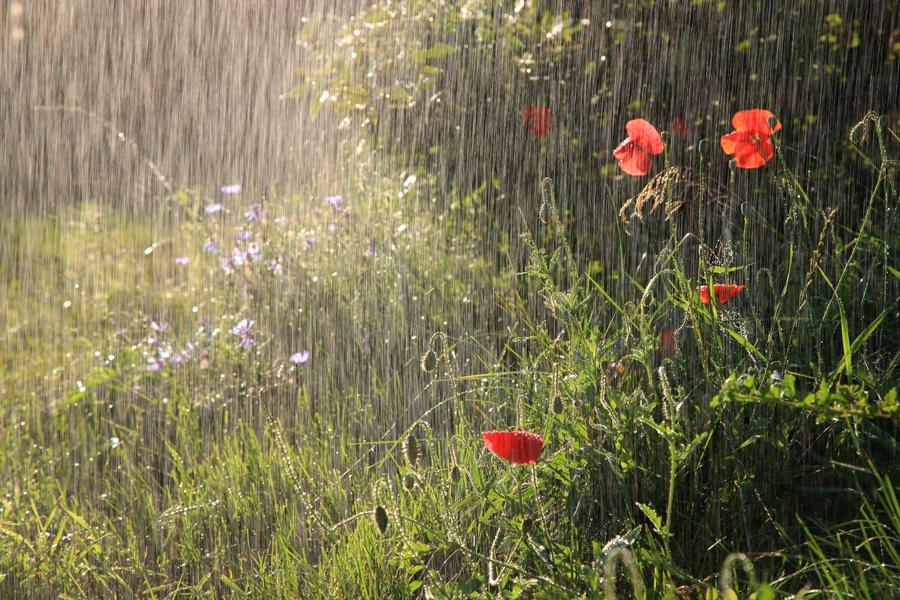 В Волгограде ожидаются дожди и похолодание