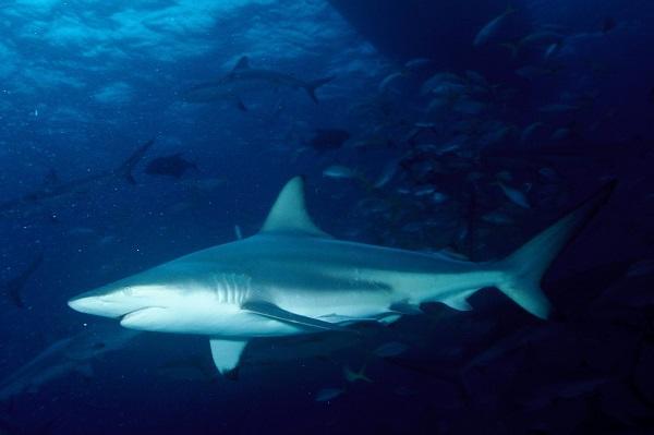 Девушка упала в бассейн с голодными акулами