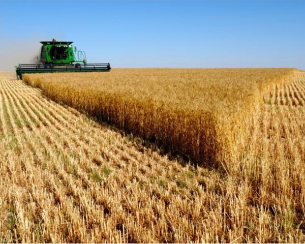 Гидрометцентр спрогнозировал падение объемов урожая зерновых в РФ