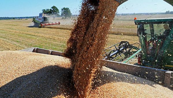 Аграрии из регионов просят ограничить экспорт зерна