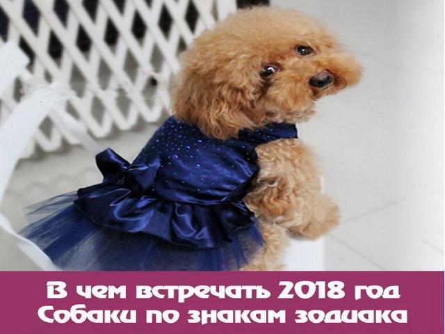В чем нужно встречать Новый 2018 год Желтой Собаки разным знакам Зодиака: рекомендации астрологов