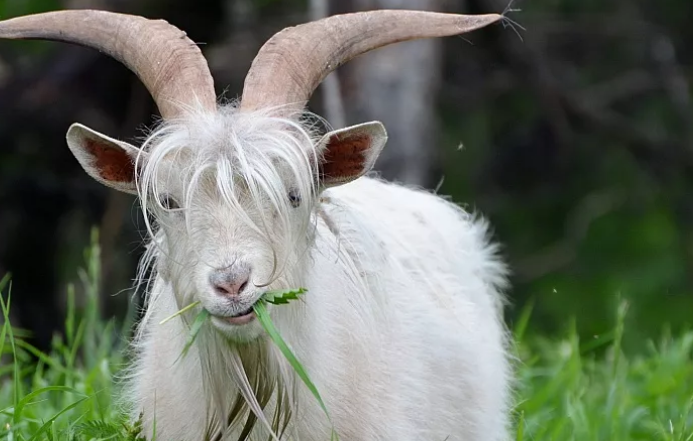 Футбольный клуб продал 18 футболистов и купил 10 коз, потому что это выгоднее