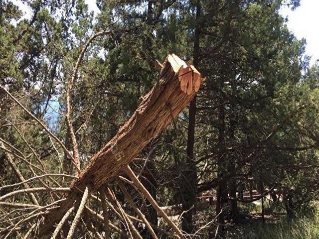 Десятки редких краснокнижных деревьев вырубили в Ялте под частную стройку