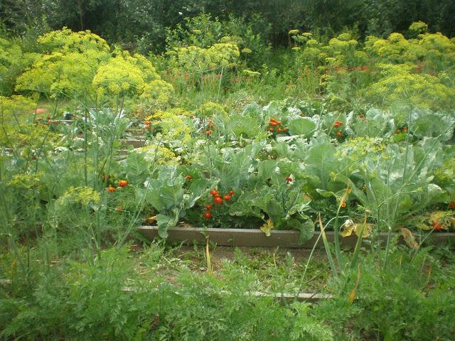 Три огородных растения способны предотвратить рак