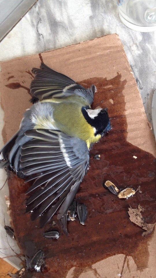 Жуткую казнь для птиц придумали жители Казани
