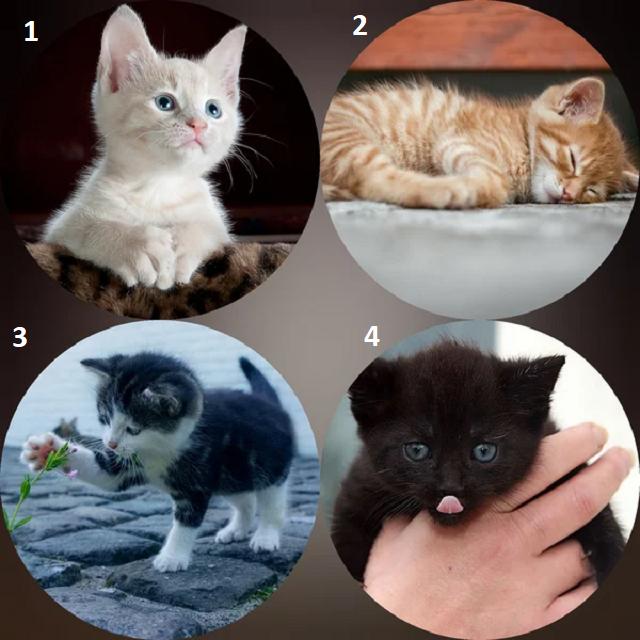 Психологический тест по картинке: выберите котенка, а мы раскроем ключевые черты вашего характера